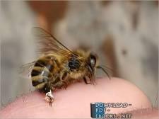 قراءة و تحميل كتاب العلاج بسم النحل PDF